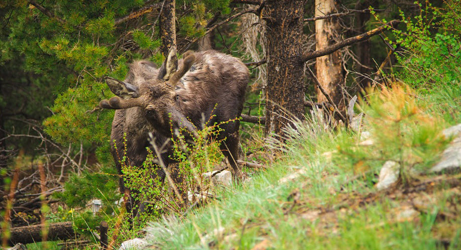 Innsamling og nedfrysing av jaktavfall